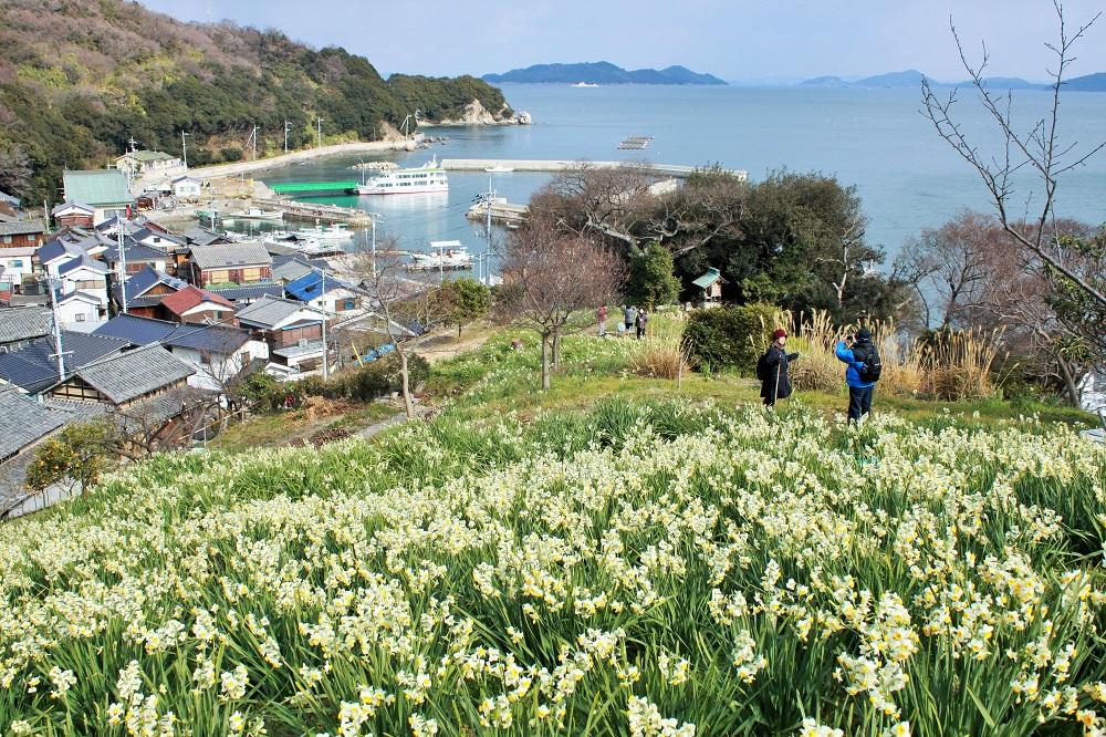 六島は、水仙の名所としても知られる